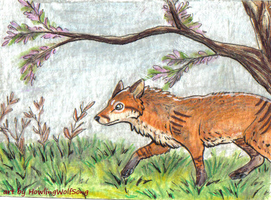 ACEO - Caminata by HowlingWolfSong
