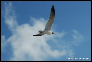 Seagul flying by microcosmos