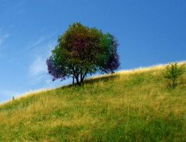 Tree on a hill by Naruto-Rendan