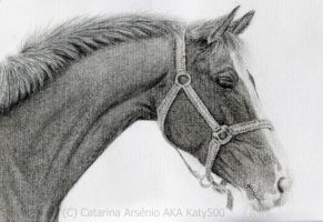 Horse Portrait 2 by Katy500
