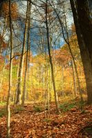 Colorful Forest 6 by bean-stock