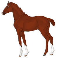 Colt by horsy1050
