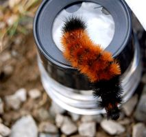 Caterpillar upon the Loop by J-s-K-Photography