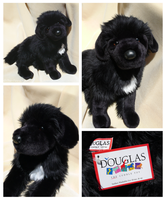 Douglas Large Floppy Dogs - Bundy Newfoundland by The-Toy-Chest
