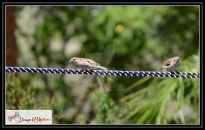 Finches by DesignKReations