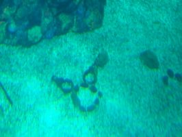 Hidden Mickey at Living Seas by Dream-finder
