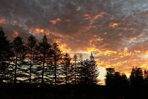 Sunset over the Pines by brunette-from-oz