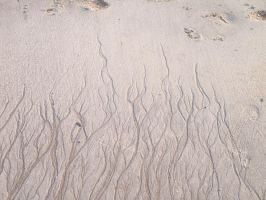 Sand Flames by Lomundra