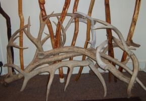 The Antler Arch by fetherhd