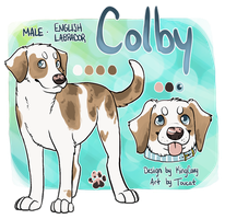 Colby Ref by Toucat
