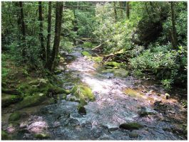 Slickrock Creek - JKM Forest by CrystalMarineGallery
