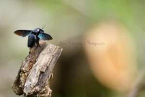 blackinsecta by dianapple