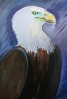 Bald Eagle by 1996ds