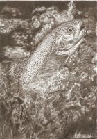 rainbow trout in pencil by SusHi182