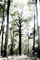 not balanced photo of forest by almonsor-stock