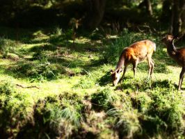 Deer in a forest (3) by yukino-k