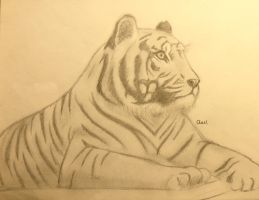 Tiger. by My-sweet-dream