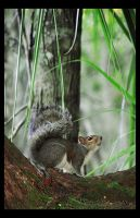 Paranoid Squirrel by shuttermonkey
