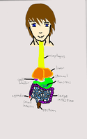 Anime-tomy: digestive system by Daemare