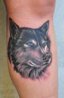 wolf by scottytat2