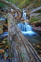 The Old Log by mjohanson