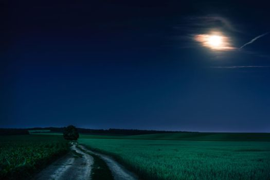 Night Fields by MoonKey19