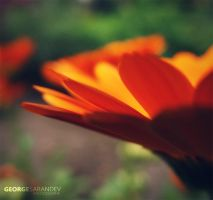 So Orange.. by georgesarandev