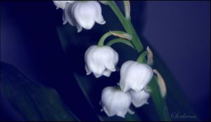 Convallaria Majalis by Anawielle