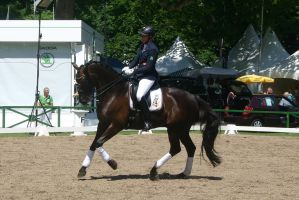 Dressage Riding Canter Stock by LuDa-Stock