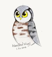 Hawk Owl Chick by AshesAndWings