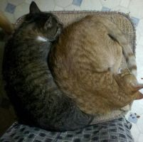 A Kitty Yin Yang by numb1