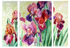 Irisies by danuta50
