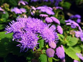 Purple Spikes by kml91225
