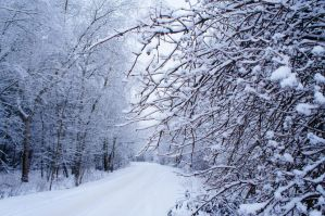 Winter fairy tales by Cathie-Cat