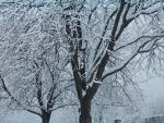 Snowy Tree Stock by barefootstock