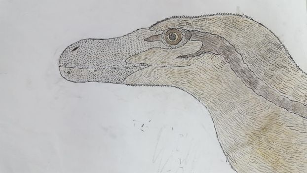 Velociraptor by Braindroppings1