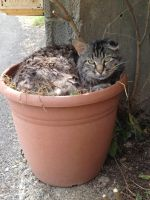 Cat in the pot by Aude-la-randonneuse