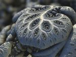 Ephemeral by batjorge