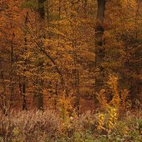 Foret en automne 2 by yuushi01