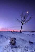 The tree and the moon... by emmanueldautriche