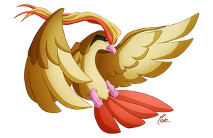 Pidgeot by Utahraptorz