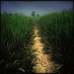 corn path by DogAngel
