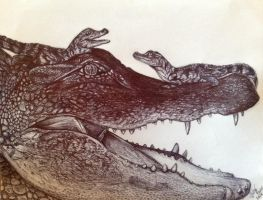 Alligator- In Pen by ProcrastiKey