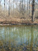Pond Shore 1 by bean-stock