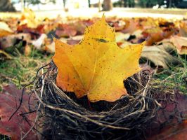 Autumn Nest by BritLawrence