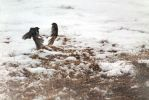 Fight by pricegotphoto