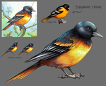 Baltimore Oriole by charfade