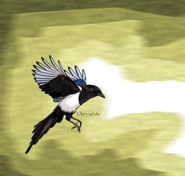 Magpie by Chrysalide36