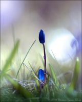 blue3 by dini25