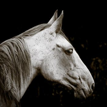 The Old Grey Mare by Elizamac